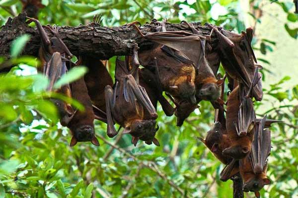 Hanging bat photo
