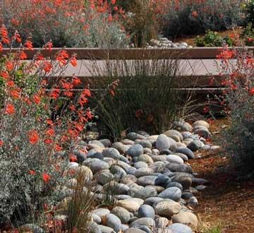 Donnelly water garden photo